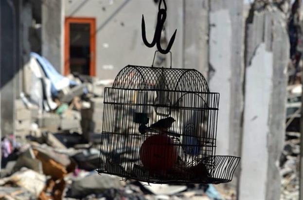 تصوير ريهام الغزالي غزة بعد الحرب ٢٠١٤