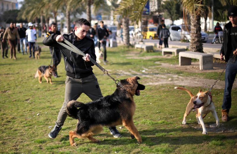 شبان في غزة ينظمون أمس أول فعالية لعرض سلالات متنوعة من الكلاب