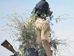 غزوة «الأنفال»  في الساحل السوري