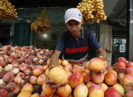 من قتل البشر في غزة لن يترك الشجر