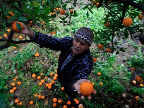 الزراعة في لبنان... سنة «النحس»