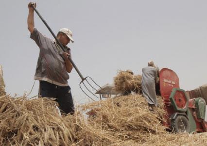 فلسطين: بدء تطبيق المصالحة