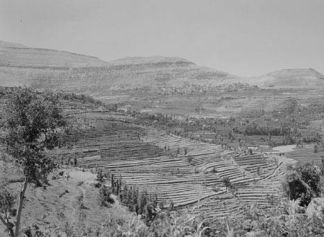 «لبنان الأخضر»: كذبة تاريخية