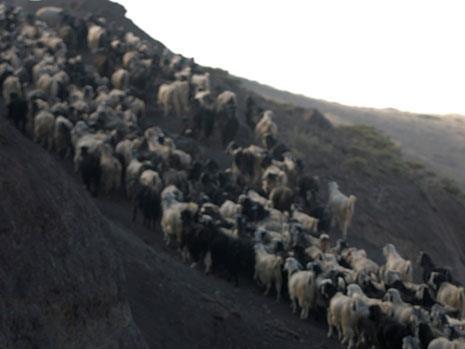 الراعي الصالح