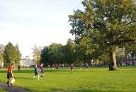 شجرة في الملعب