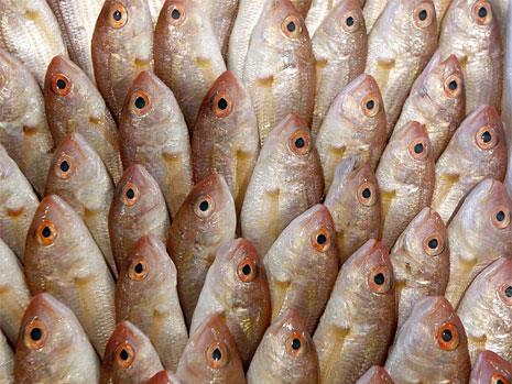 في المزاد كما في البحر: السمك للجميع