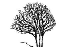 شجرة الحياة تتعرى في دمشق: نصوص من مدينة الحنين