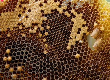 شهر العسل المتجدّد  في جرود الضنية