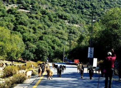 وادي الحجير: نحو حماية للمحمية