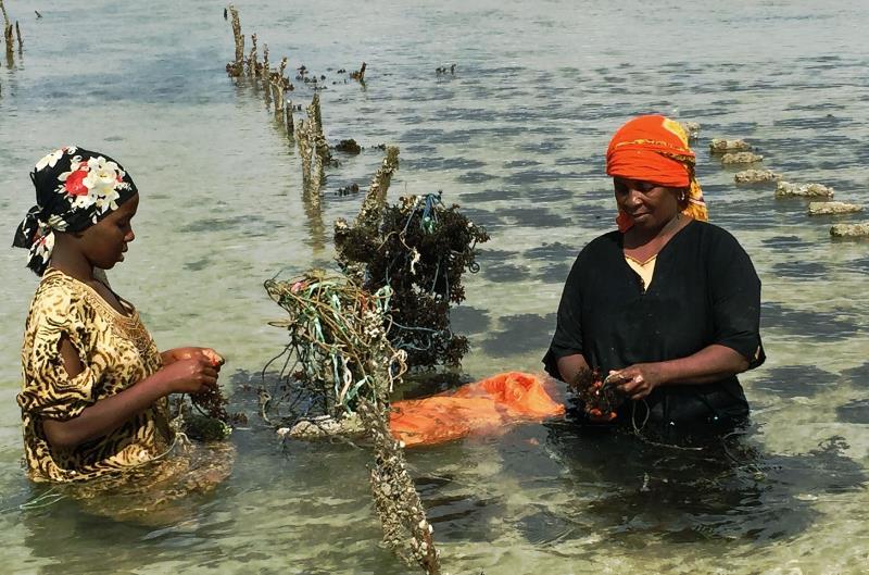 زعيم قبيلة: بدأ البحر بأكل اليابسة فأجبرنا على الهرب (أ ف ب)