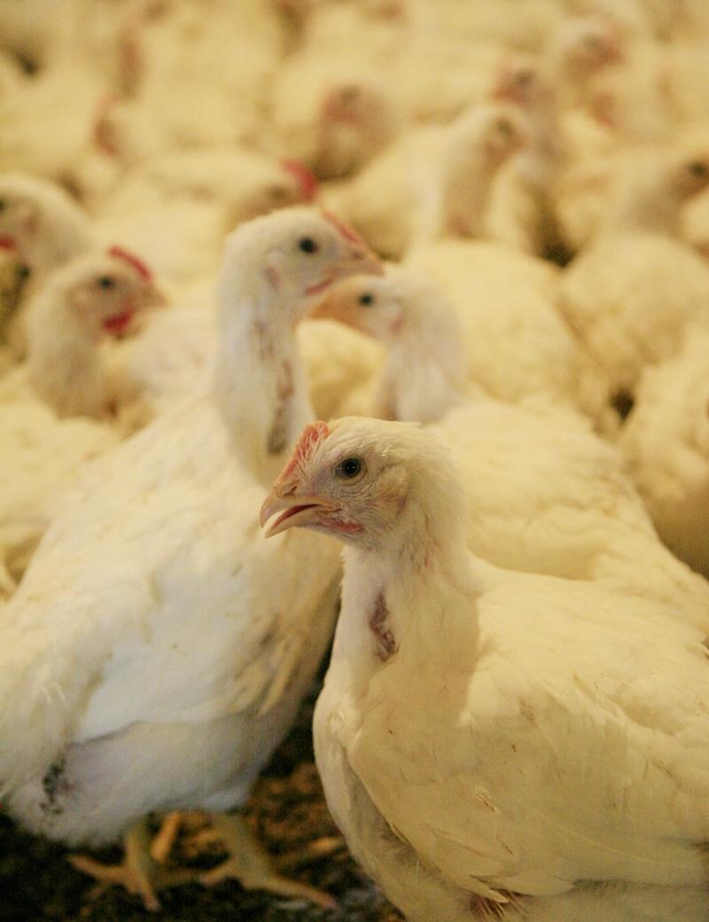 أصدر وزير الزراعة السابق قرارات عن «الحَلال»، فيما الوزير الحالي لا يعلم عنها شيئاً (مروان بو حيدر)