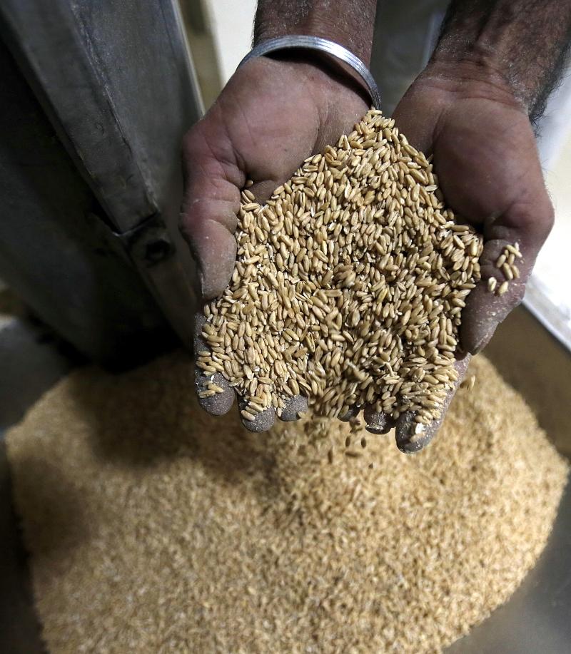 يؤكد تقرير وزارة الزراعة نظافة العنابر من دون الدخول إليها! (هيثم الموسوي)