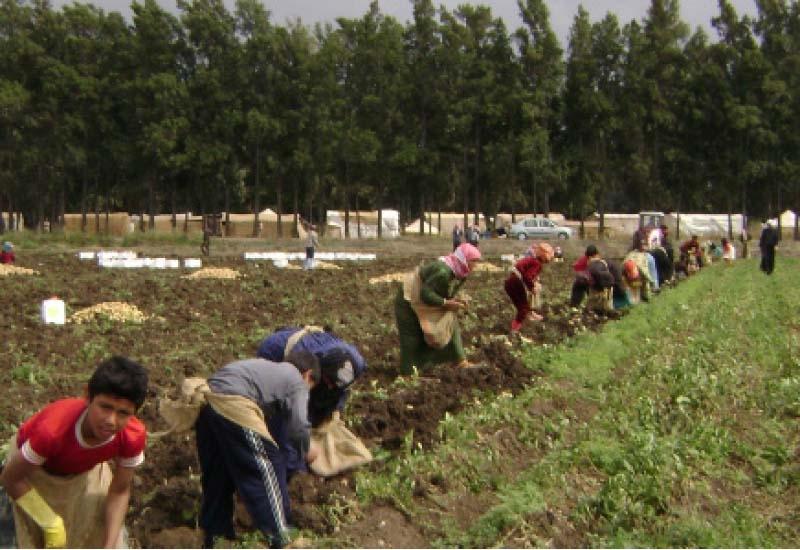 تمّ تحقير العمل الزراعي لصالح الزراعة العضوية وهي ببساطة ما كان يفعله الأجداد (وائل عبدالله)