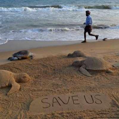 الانسحاب من خطة حماية الحيتان والسلاحف «غير قانوني»