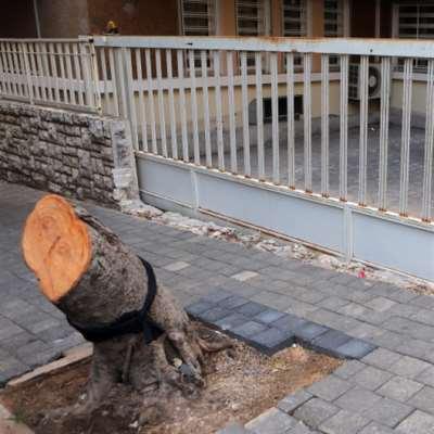 إقطع شجرة تربح «باركينغ»... وبلدية بيروت غائبة
