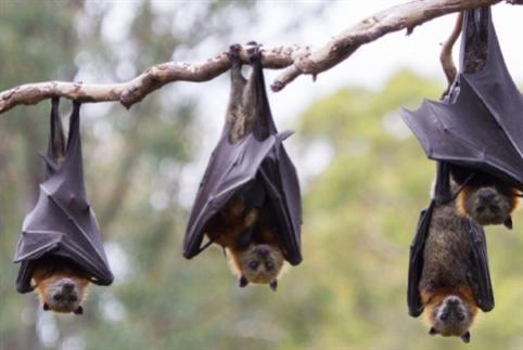 قاتل الحشرات اللبناني مهدَّد بالانقراض!
