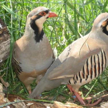 العجز عن منع «قتل» الطيور لا يبرّر تنظيمه!