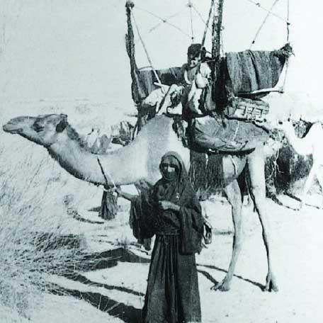 فجر الإبل، نجم العرب