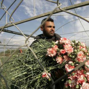 يا ورد (غزّة) مين يشتريك؟