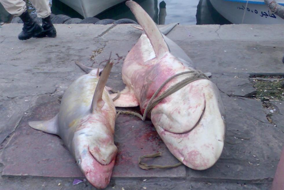 ليس لـ«القرش اللبناني» قانون يحميه