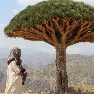 سقطرى: أُكلت الجزيرة يومَ «جَرَّدها» هادي
