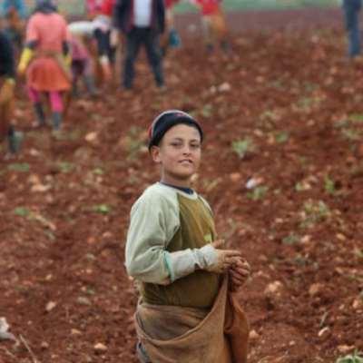 سوق المبيدات الزراعية: «حاميها... مستوردوها»!