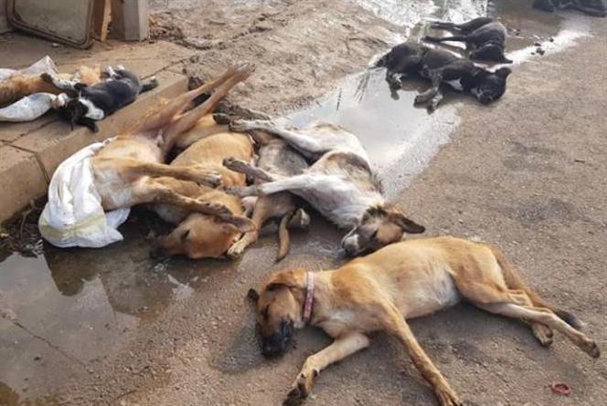 مجزرة كلاب في الميناء: تجار البناء متّهمون