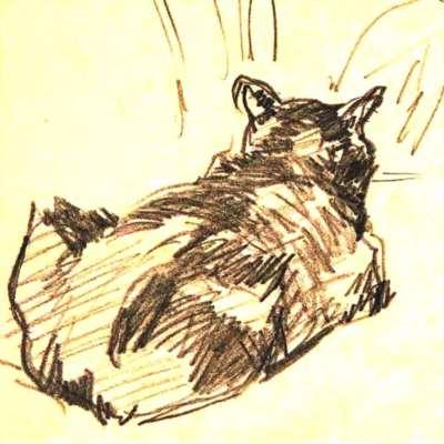 القطّ الأسود