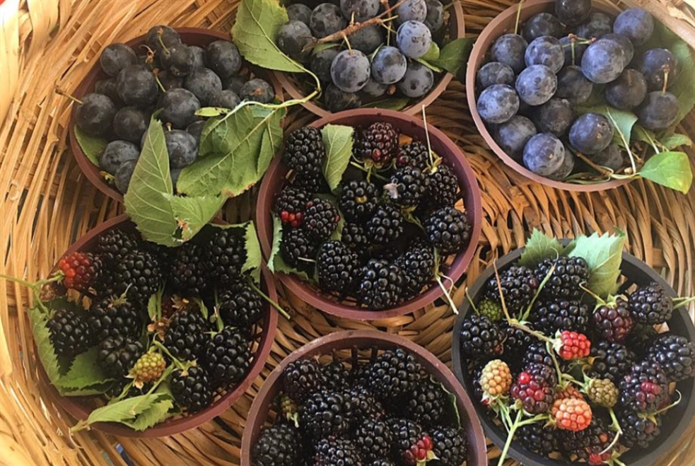 مزارعو بدارو: سوق أسبوعي