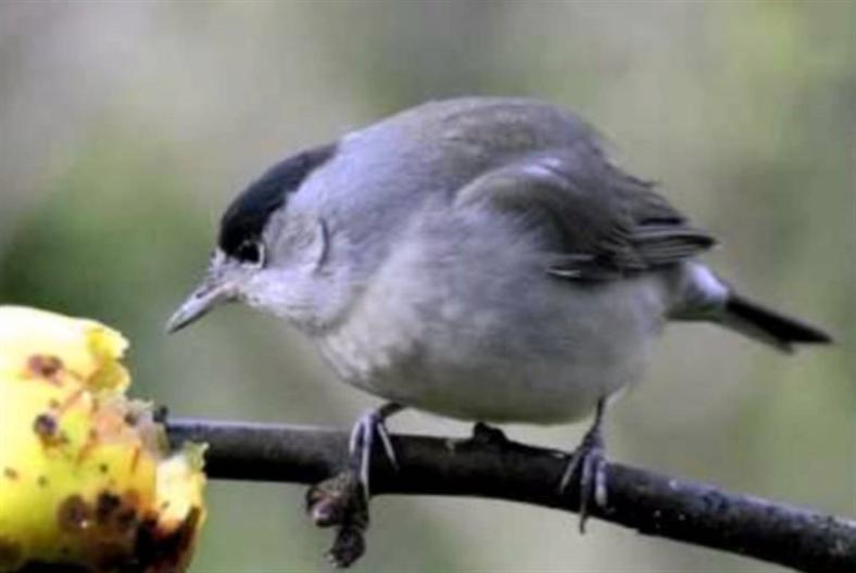 مجازر الطيور في أول أيام «موسم الصيد»: من يحاسب وزير البيئة؟