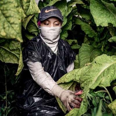 تقرير: أطفال أميركيون يعملون في الزراعة بظروف «مُرعبة»