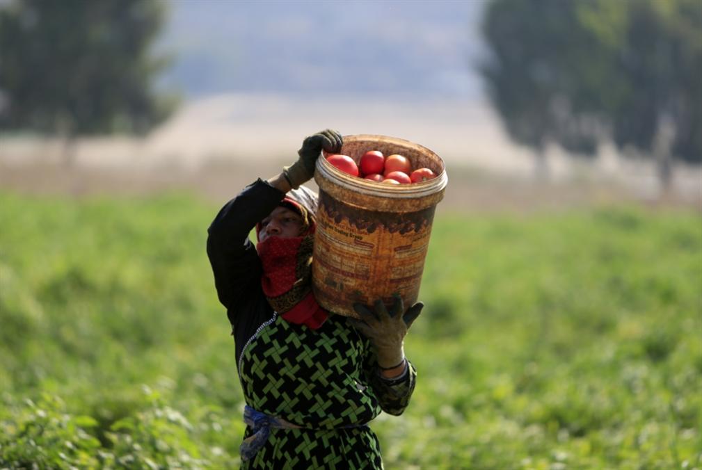 «أنا مقاوم أنا مزارع»: فليأتِ الحصار!
