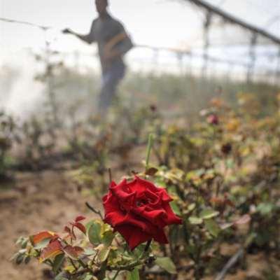«كوتة» أولية ووعودٌ بالمزيد: العمّال الغزّيون يعودون إلى الأراضي المحتلة