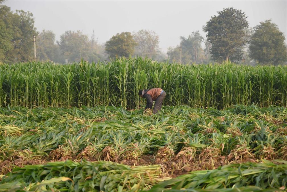 إشكالية المسألة الزراعية في سوريا: مدخل إلى الأزمة الكبرى