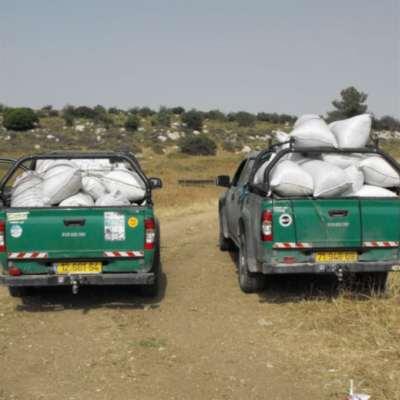 يوم قرّرت إسرائيل محاربة الفلسطينيين بـ«حماية» الزعتر!