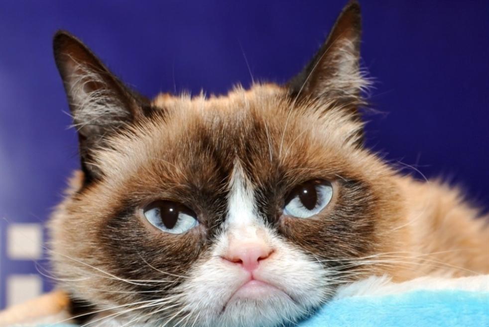 النت حزين على رحيل Grumpy Cat