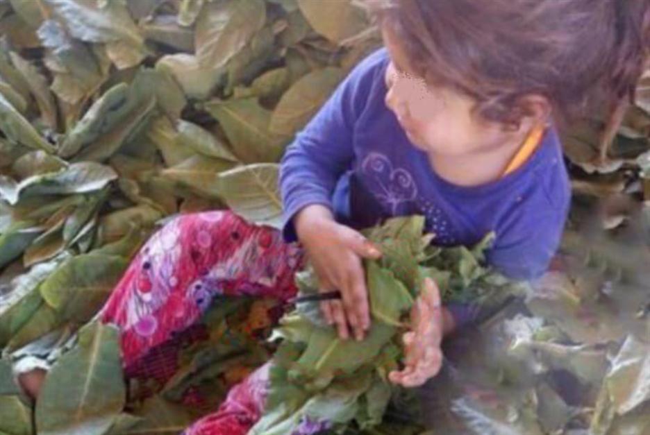 75 في المئة من الأطفال السوريين في البقاع يعملون    في الزراعة
