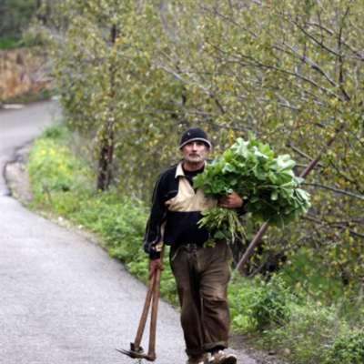 نصف المزارعين لا يلتزمون بالمعايير