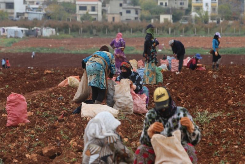 مشروع «فاو» لدعم التعاونيات الزراعية النسائية: 76% من التمويل رواتب وسفر ومصاريف!