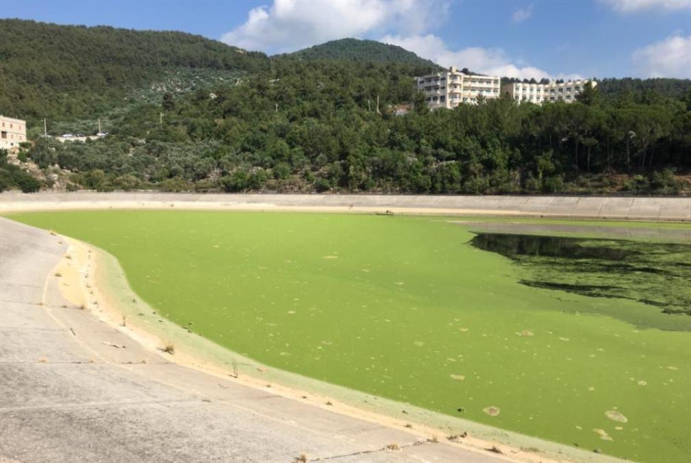 ليست كل خضرة على وجه الماء تلوّثاً: «عدس الماء» هل يكون حلاً لسموم القرعون؟