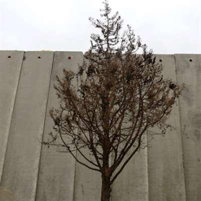الجدار على الطريق من العديسة إلى كفركلا: عنف تاريخي طويل