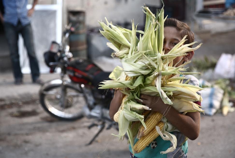 «نزوح» من الزراعة إلى «مهن الربح السريع»... من يزرع أرض الشرقية؟