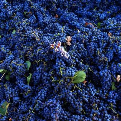 ثقافة النبيذ