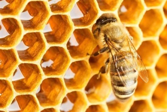 تربية النحل: دورة جنوبية