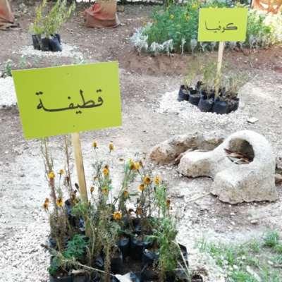في اللاذقية: «سوق الجمعة» ينتحل شخصية «معرض زهور»!