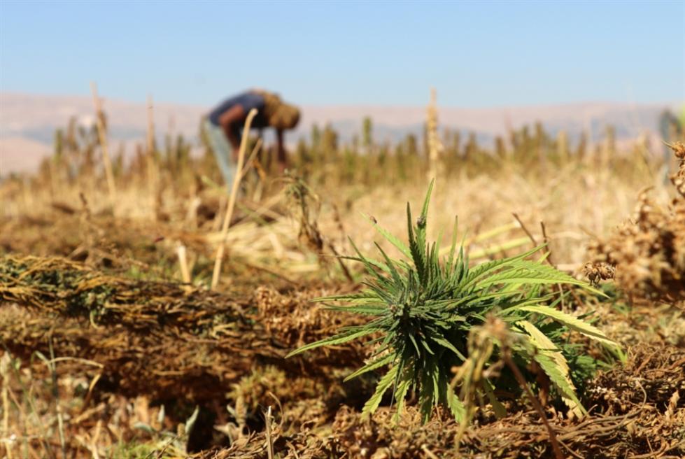 الأراضي المزروعة زادت من 20 ألف دونم إلى أكثر من 30 ألفاً