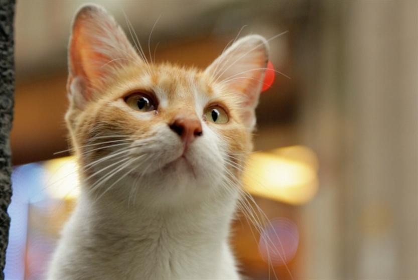 القطط في اسطنبول... والسينما في عمّان