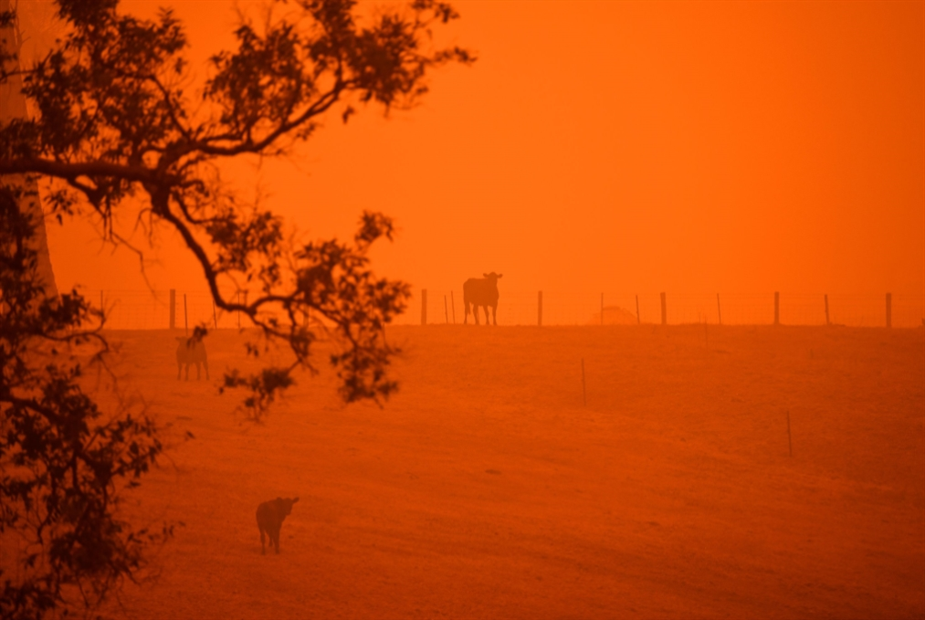 نفوق مليار حيوان في أوستراليا: «ما نراه هو آثار التغيّر المناخي»