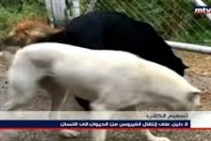 قناة mtv: إنكار تام تجاه مسؤوليتها عن قتل الحيوانات!