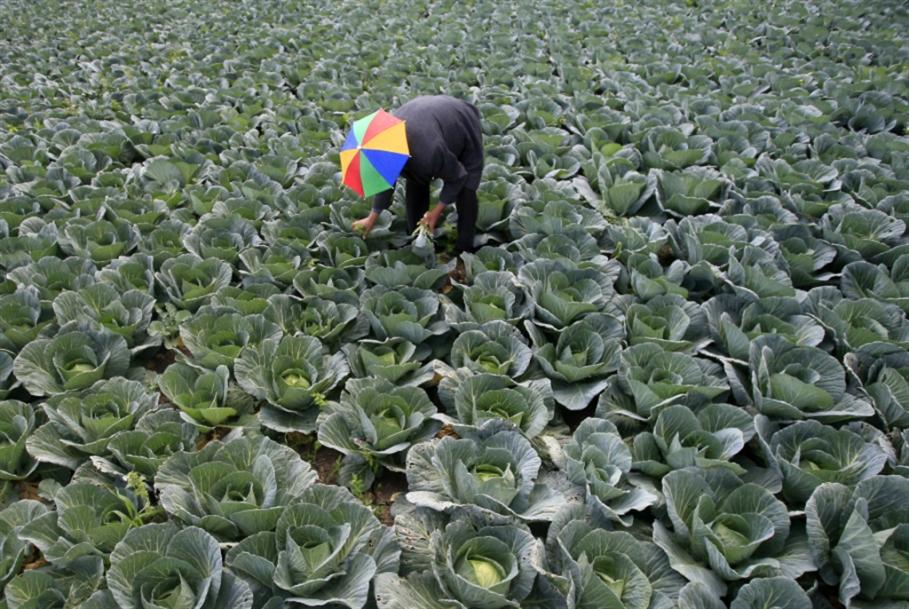 اقتراحات لتطوير خطّة الطوارئ: «الزراعة بنت بيئتها»